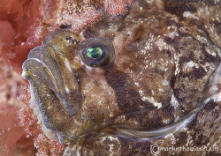 Face of a Topknot.